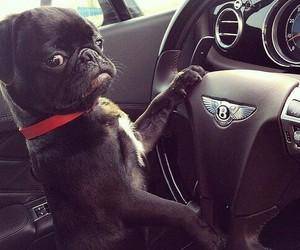 dog and car image