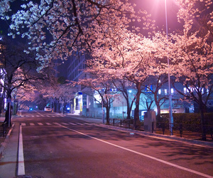 cherry blossom, neon, and photography image