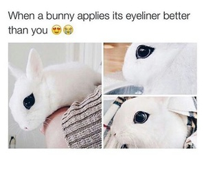 cute, bunny, and eyeliner image