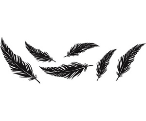 black, tumblr, and feathers image