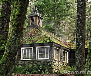 cottage, country, and woods image