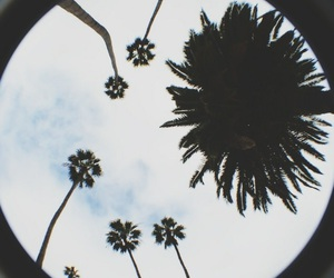palm trees, clouds, and photography image