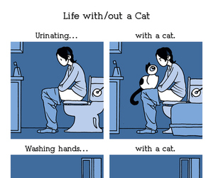 cat, funny, and life image