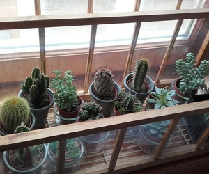 cacti, cactus, and home image