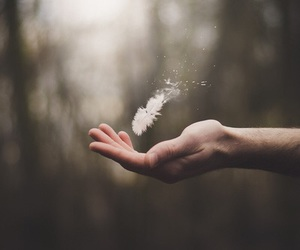 feather, hand, and photography image