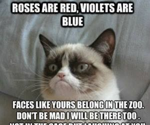 funny, cat, and zoo image
