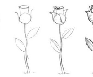 rose, drawing, and draw image