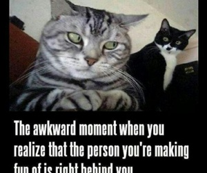 funny, cat, and awkward image