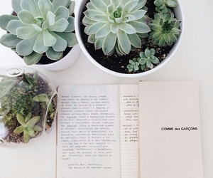 plants, book, and aesthetic image