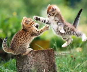 kittens and play image