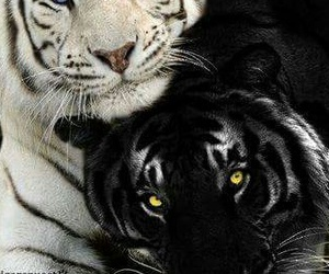 black and wwhite love image