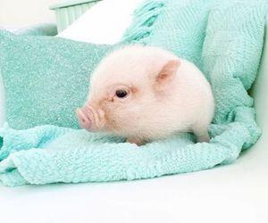 pig, animal, and pink image