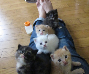 cat, kittens, and cute image
