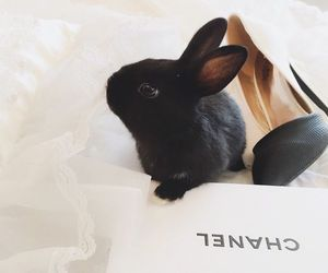 bunny, chanel, and fashion image