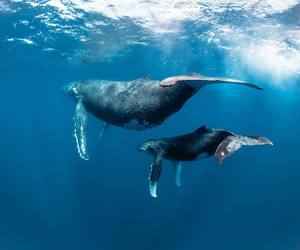 animals, sea, and whales image