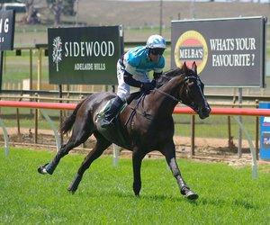 jumps racing, australian jumps racing, and oakbank racing club image