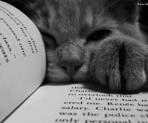 adorable, book, and cat image