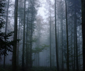 forest, mist, and trees image