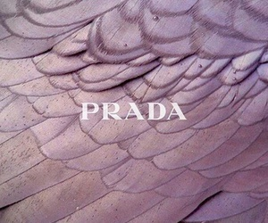 Prada and purple image