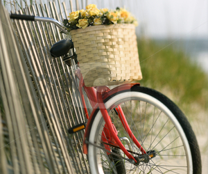 beach and bicycle image