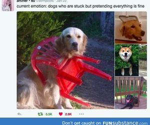 funny, dogs, and lol image
