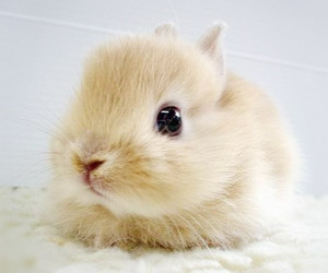 bunny, cute, and adorable image