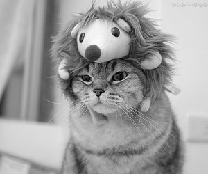 b&w, cat, and hedgehog image
