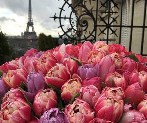 flowers, paris, and tulips image