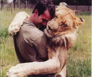 amigos, lion, and friend image