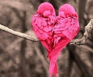 pink bird love image