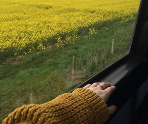 yellow and trip image