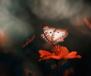 butterfly and faerie image