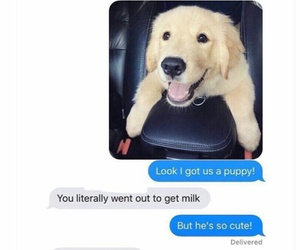 dog, funny, and wife image