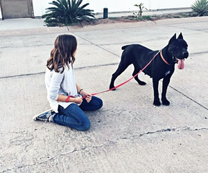 dogs love and cane corso image