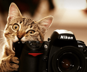 animal, camera, and cat image