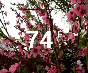 aesthetic, blooming, and nature image