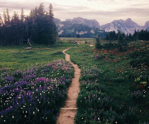 nature, flowers, and mountains image