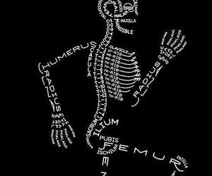 bones, skeleton, and anatomy image