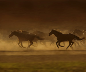 free, herd, and horses image