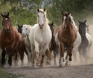 herd, horses, and leader image