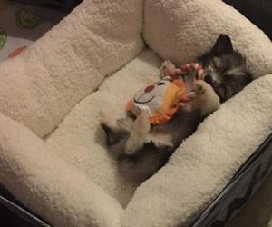 cuddle, dog, and maltese image