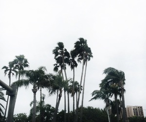 florida, palm trees, and spring image