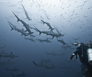 costa rica, sharks, and cocos island image