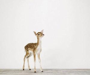 deer, animal, and fawn image