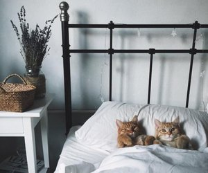 cat, bed, and animal image