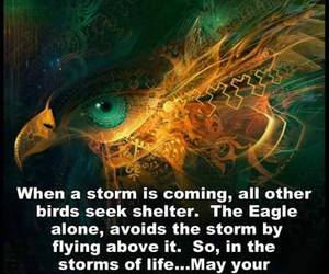 eagle, quote, and life image