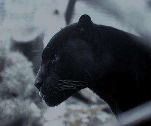 black and animal image