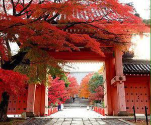 japan, red, and travel image