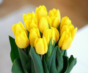 flowers, tulips, and yellow image