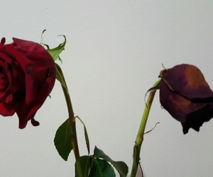 flori, trandafiri, and uscati image